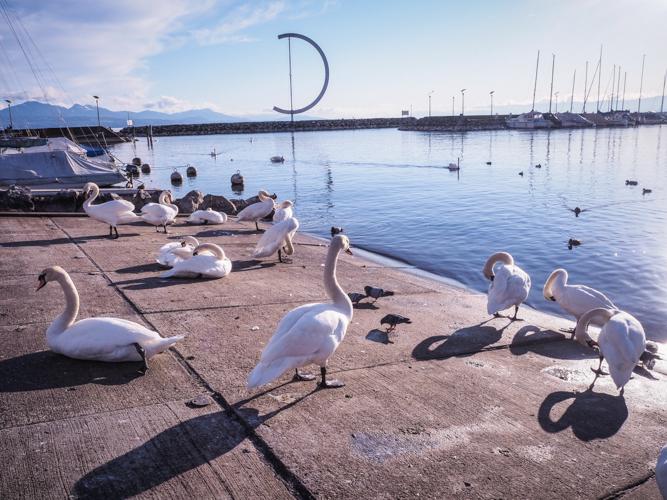 Suisse lausanne lac léman