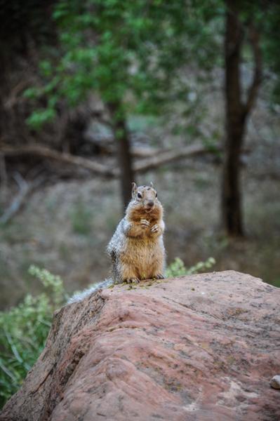 Zion USA parc national