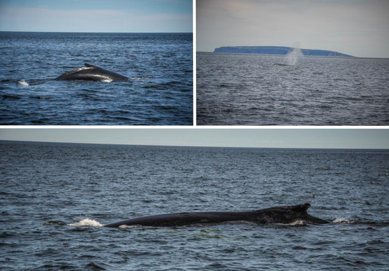 parc forillon gaspésie baleines québec