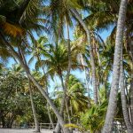plage de la caravelle Guadeloupe