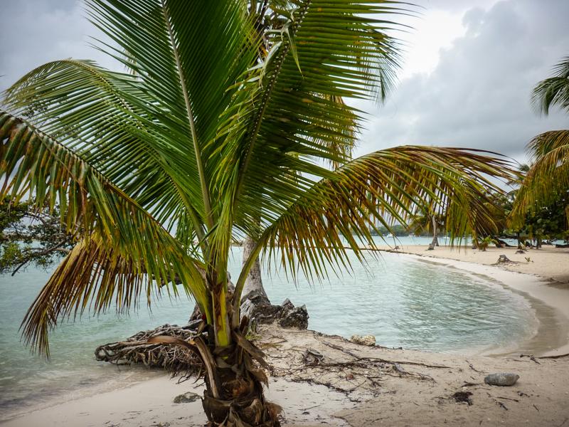 plage sainte anne guadeloupe