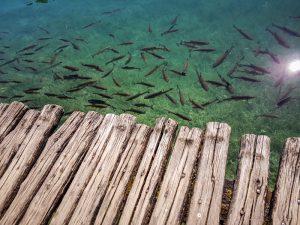 croatie-lac-poissons