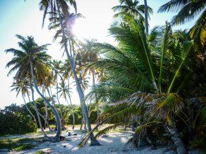 notre-top-5-des-plus-belles-plages-de-martinique