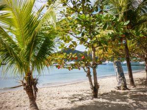 martinique-palmiers