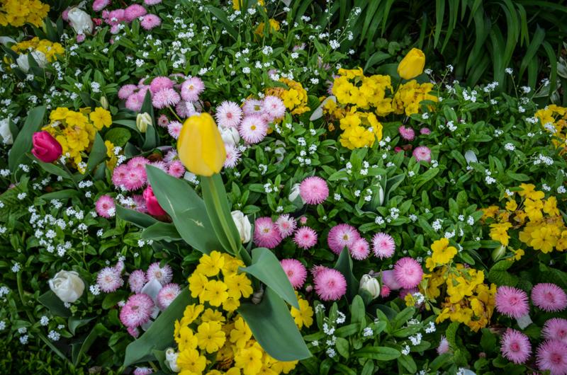 parc du thabor fleurs