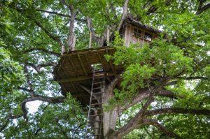cabane-perchee-arbre-domaine-des-ormes