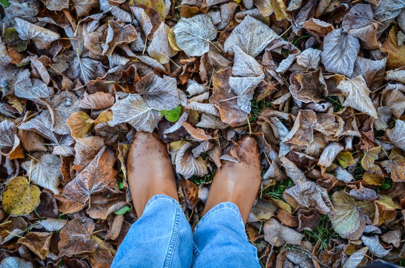 feuilles-hiver