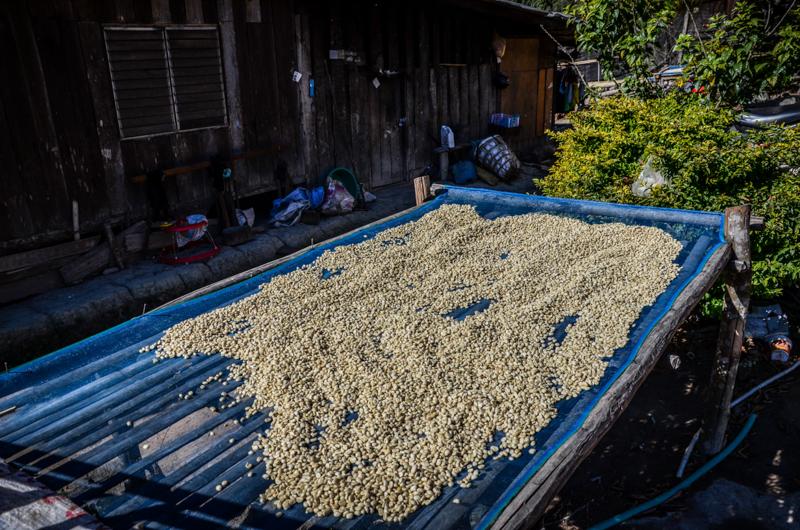 cafe-village-hmong