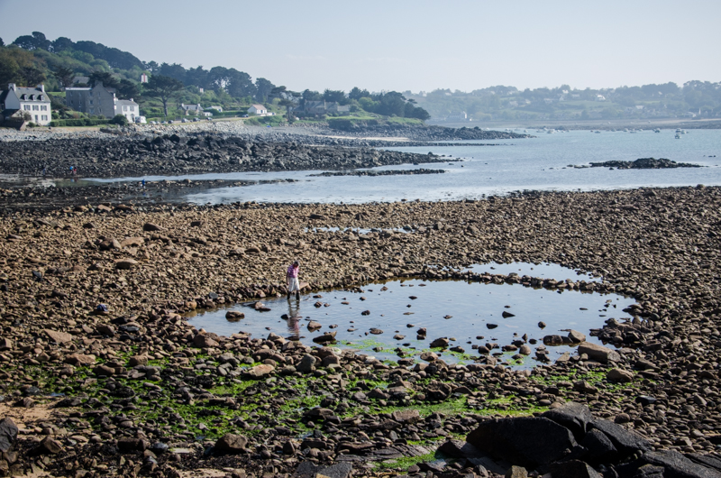 plougasnou marée basse