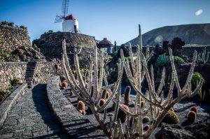 Jardin de cactus lanzarote