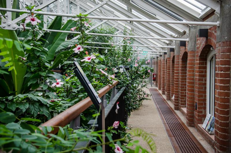 serre jardin botanique belfast