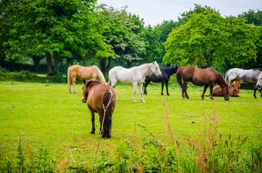 chevaux-trebeurden