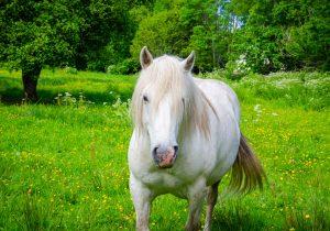 marais-quellen-cheval-camargue